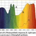 grafico decolores led