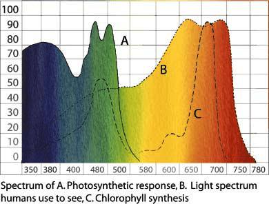 Gráfico la línea de respuesta a la fotosíntesis