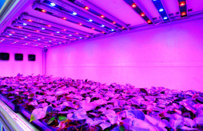 Iluminación LED para cultivos de interior y exterior