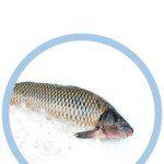 Iluminacion led pescado fresco