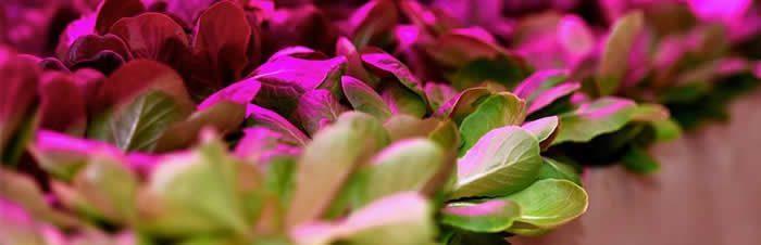 led para crecimiento de plantas